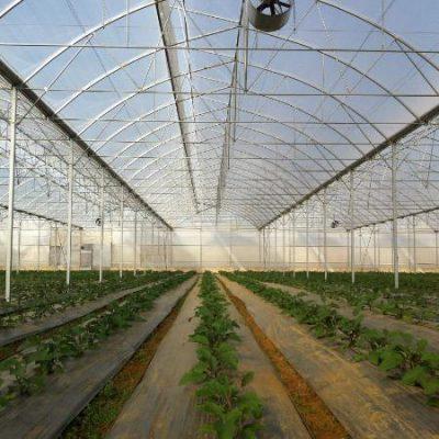 ساخت بزرگترین گلخانه چند منظوره هیدروپونیک غرب کشور